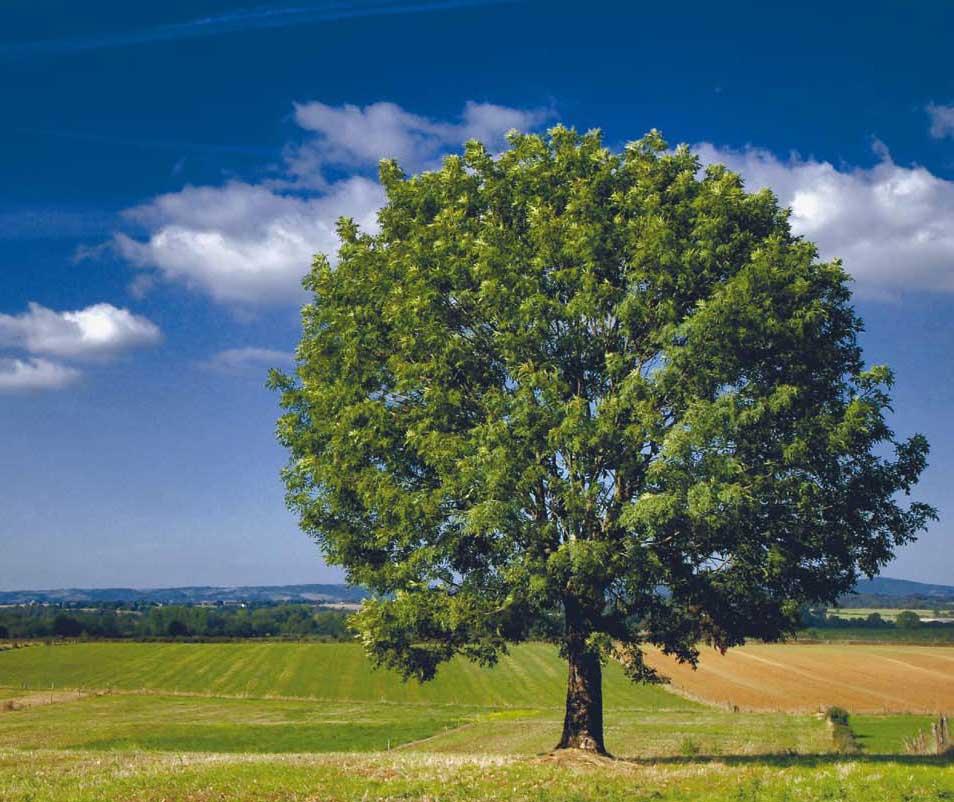 Rustabos miljöpanna bidrar till en hållbar utveckling